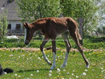 2011.05.10 - Pierwszy spacer Sarabi
