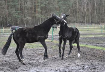 "2012.02.02 - Miłosny ""trójkącik"""