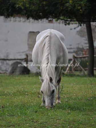 """2012.03.02 - """"Śliczne kucątko"""""""