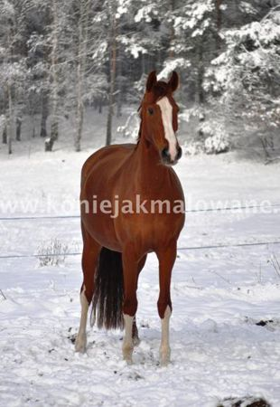2015.02.14 Wyczekany śnieg